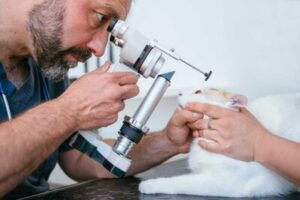 Veterinarian giving Cat an eye exam
